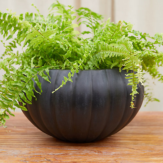 View larger image of Fiber Pumpkin Bowl Planter