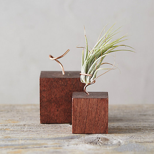 View larger image of Wood Block Tillandsia Stand