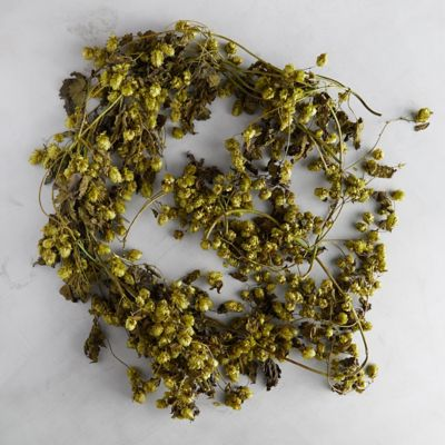 Preserved Hops Garland