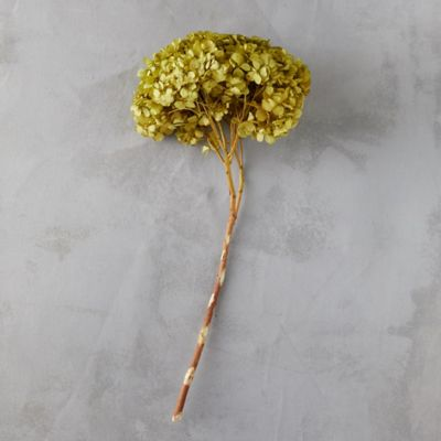 Preserved Green Hydrangea Bunch