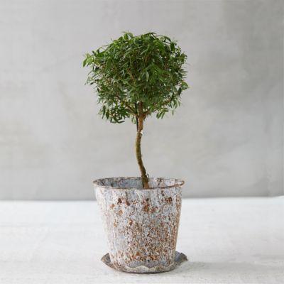 Aged Zinc Pot + Saucer Set