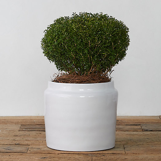 View larger image of Glazed Ceramic Jug Planter