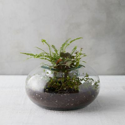 Fold Down Bowl Terrarium