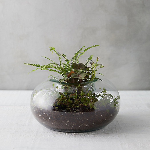 View larger image of Fold Down Bowl Terrarium