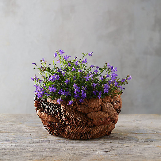 View larger image of Fir Cone Bowl Planter