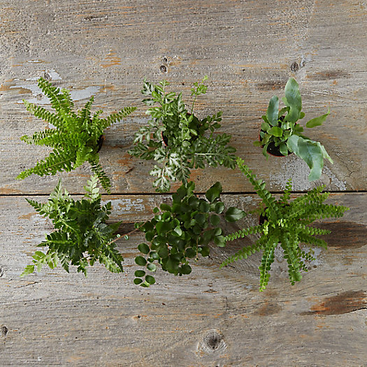 View larger image of Fern Collection