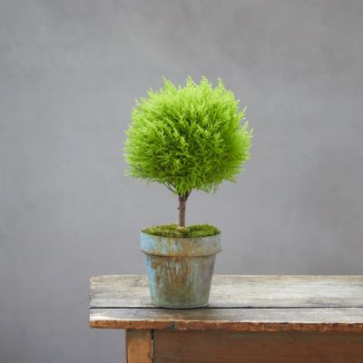 Lemon Cypress Topiary, Green Metal Pot