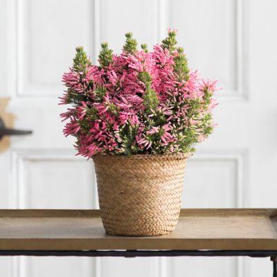 Italian Heather, Woven Grass Pot