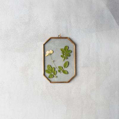 Brass Octagon Specimen Frame, Small