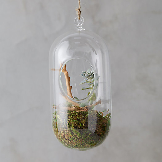 View larger image of Hanging Oval Terrarium, Large