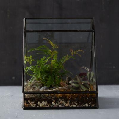 A-Frame Terrarium