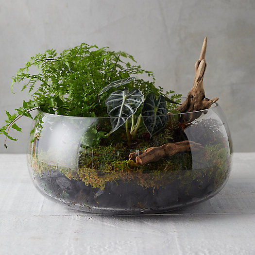 View larger image of Pond Bowl Terrarium