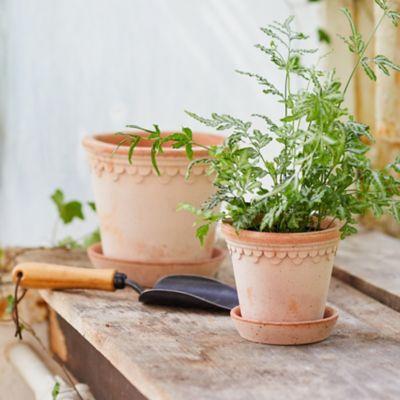 Bergs Palace Pot + Saucer