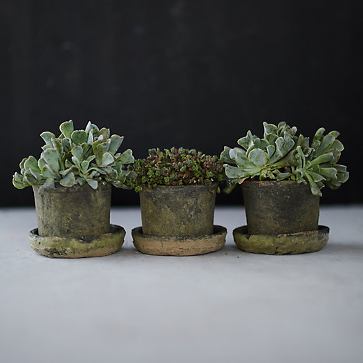 View larger image of Earth Fired Clay Low Sill Pot + Saucer, Set of 3