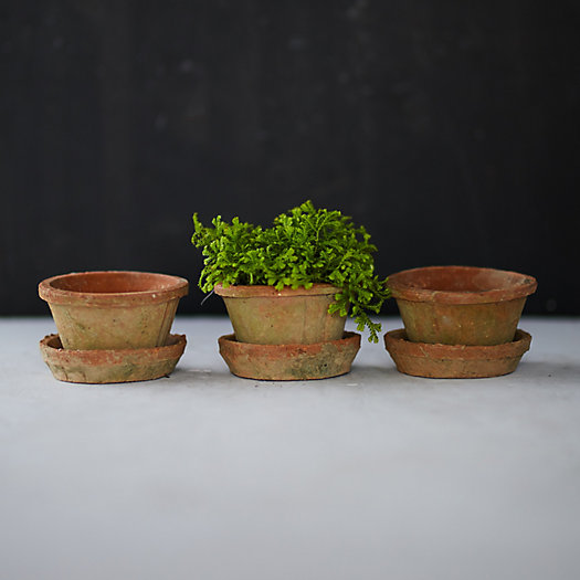 View larger image of Earth Fired Clay Thin Rim Pot + Saucer, Set of 3