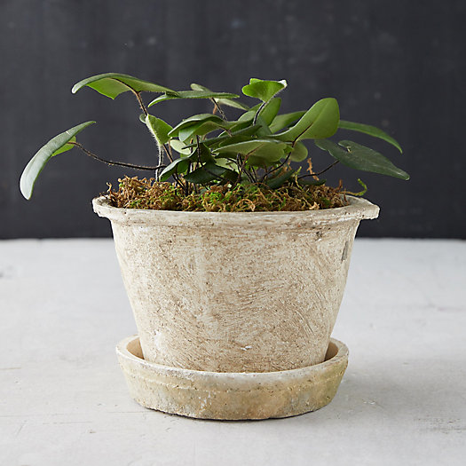 View larger image of Earth Fired Clay Thin Rim Pot + Saucer Set