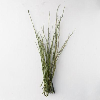 Dried Moneta Branch