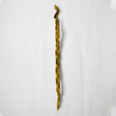 Dried Cipo Stalk, Extra Large