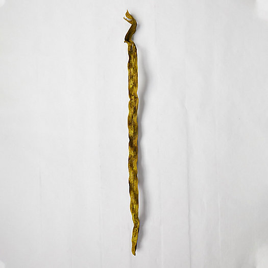 View larger image of Dried Cipo Stalk, Extra Large