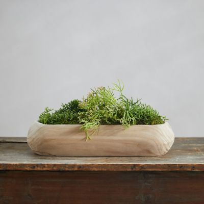 Rhipsalis Garden, Wood Trough