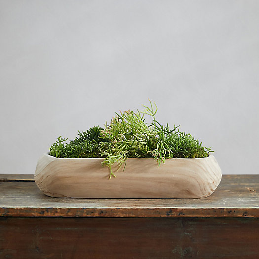 View larger image of Rhipsalis Garden, Wood Trough