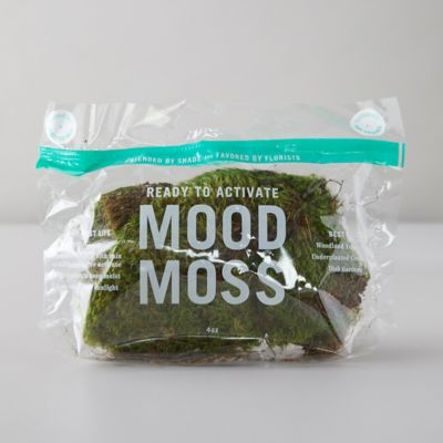 Preserved Mood Moss