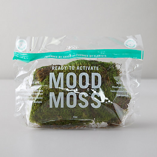 View larger image of Preserved Mood Moss