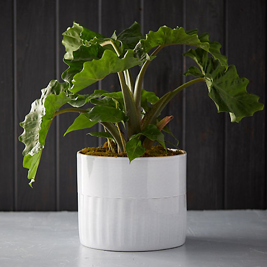 View larger image of Ribbed Earthenware Pot