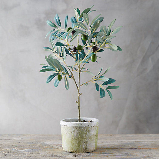 View larger image of Faux Olive Tree