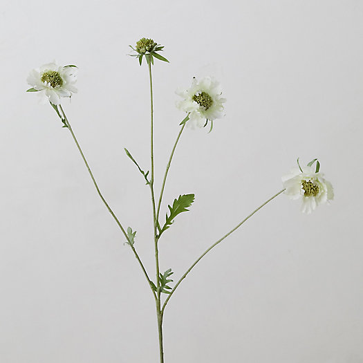View larger image of Faux Scabiosa Spray