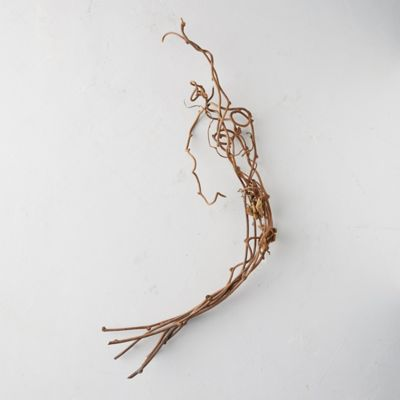 Dried Kiwi Vine