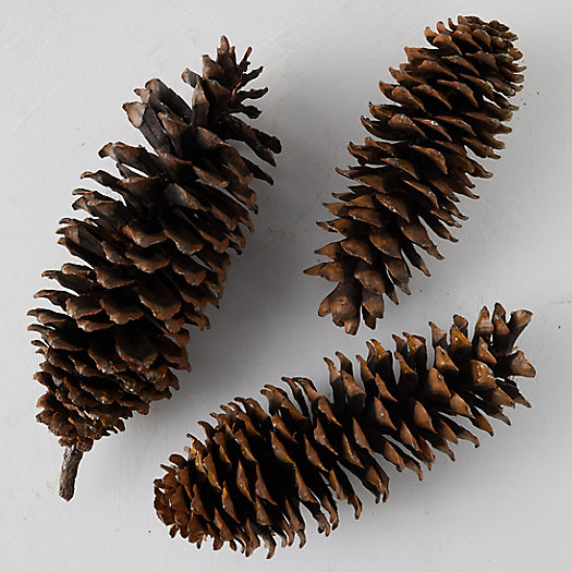 View larger image of Sugar Pinecone Bunch