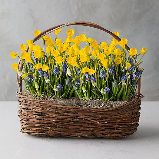 View larger image of Daffodil + Muscari Bulbs, Willow Basket