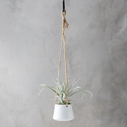 View larger image of Faux Succulent in Hanging Pot