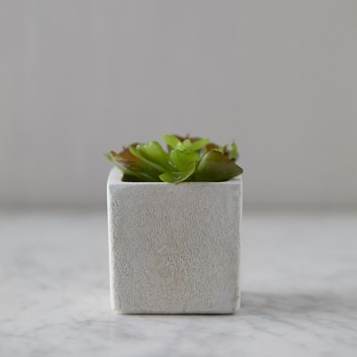 Faux Succulent, Ceramic Pot