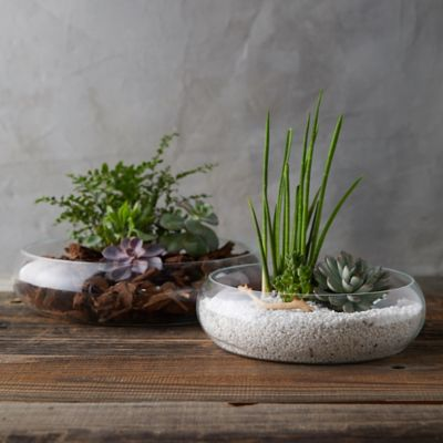Low Profile Bowl Terrarium