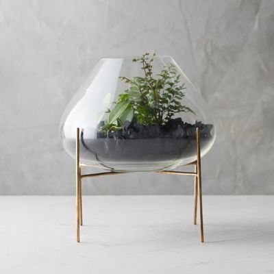 Low Terrarium, Brass Stand