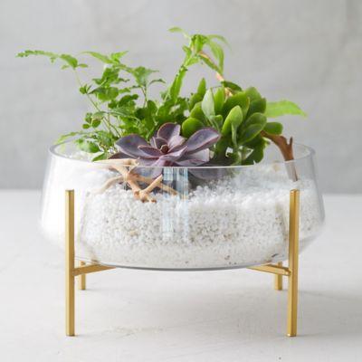 Bowl Terrarium, Brass Stand