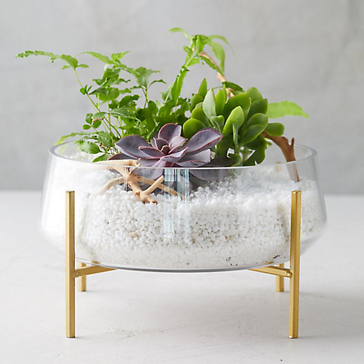 View larger image of Bowl Terrarium, Brass Stand