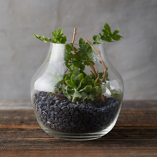 View larger image of Vase Terrarium