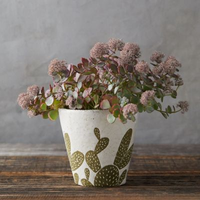 Prickly Pear Pot