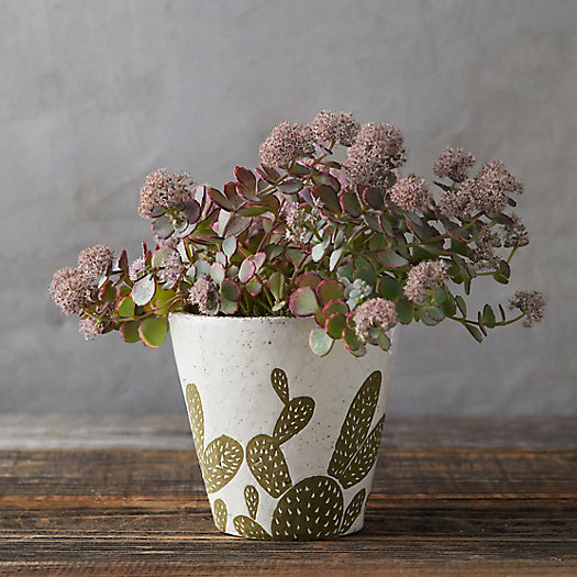 View larger image of Prickly Pear Pot