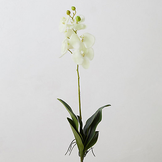 View larger image of Faux White Orchind Stem