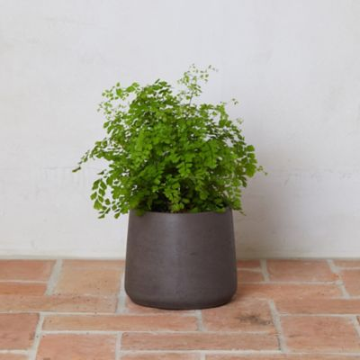 Cement Drop Pot