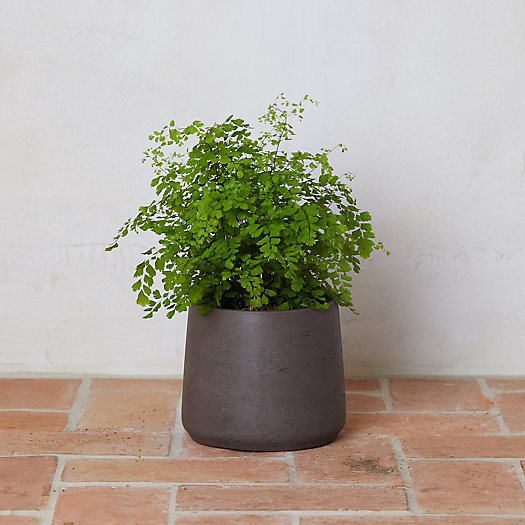 View larger image of Cement Drop Pot