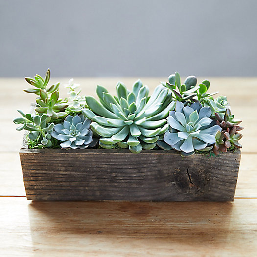 View larger image of Succulent Garden, Wood Trough