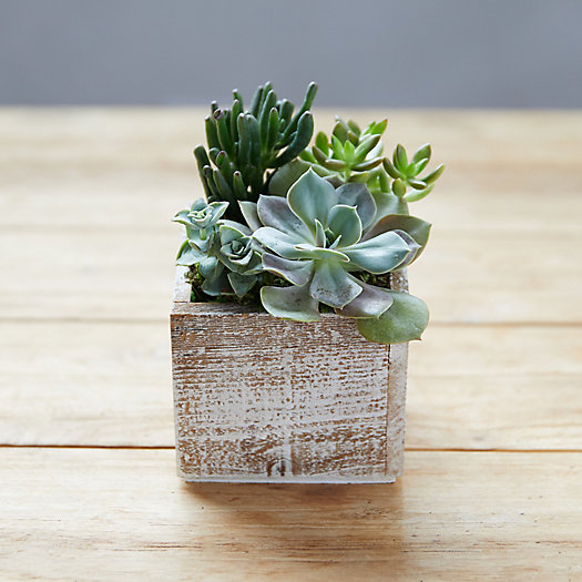View larger image of Succulent Garden, Square Wood Pot