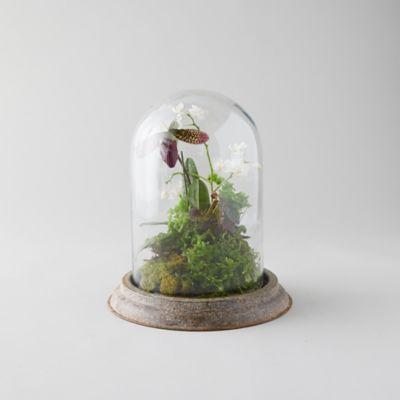 Distressed Iron + Glass Cloche
