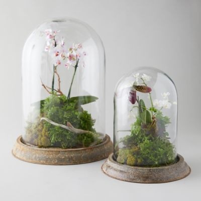 Distressed Iron + Glass Cloche