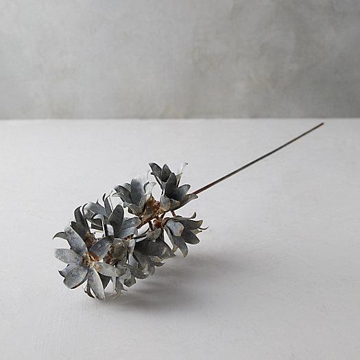 View larger image of Iron Hyacinth Stem